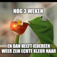 Kermit10.jpg