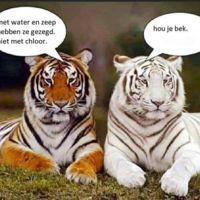 tijgers.jpg