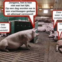 varkenscomplot.jpg